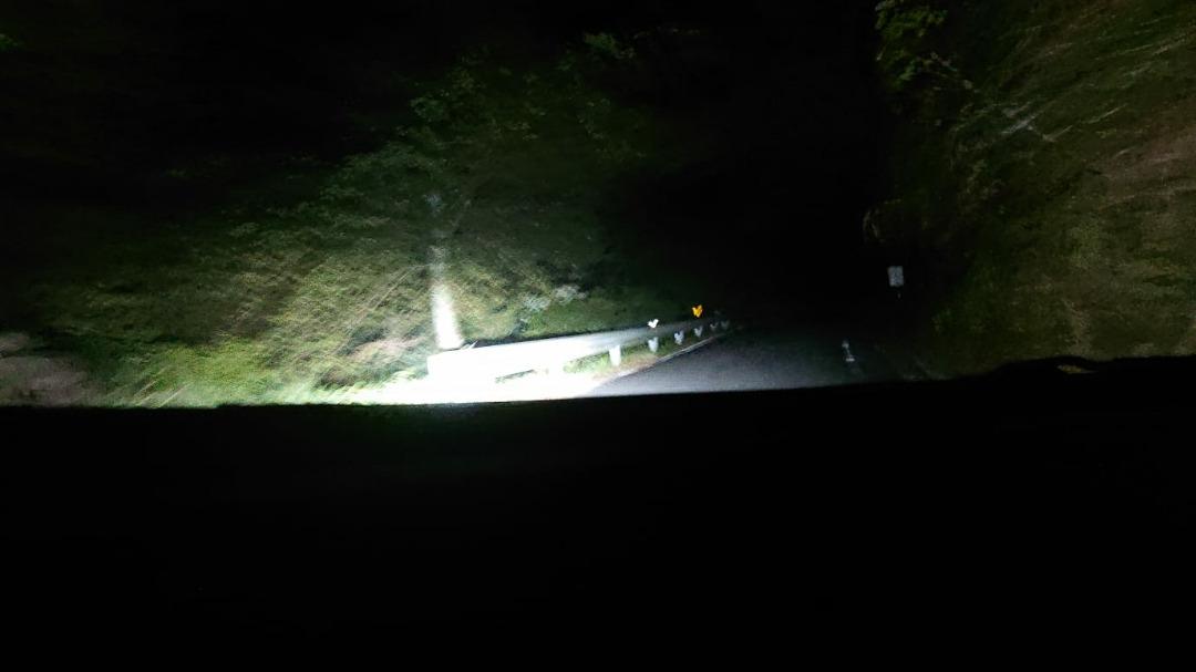 夜景~小鹿に遭遇~