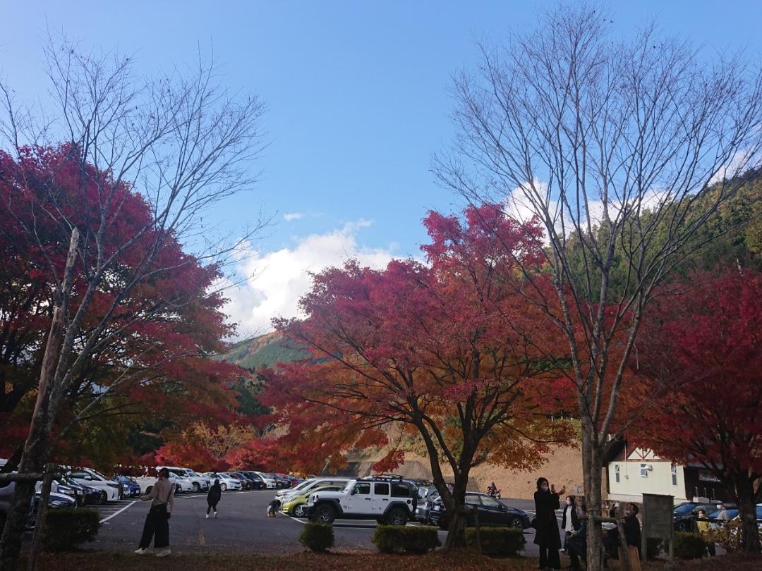 紅葉と滝を一緒に楽しむ