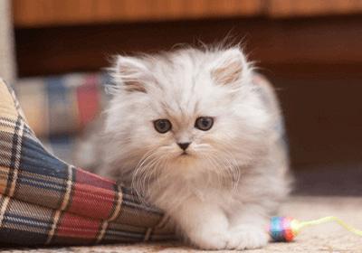猫の保護。呆れて言葉も出て来ないということ。